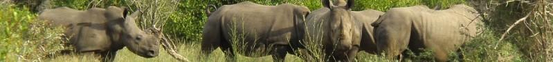 botswana uput
